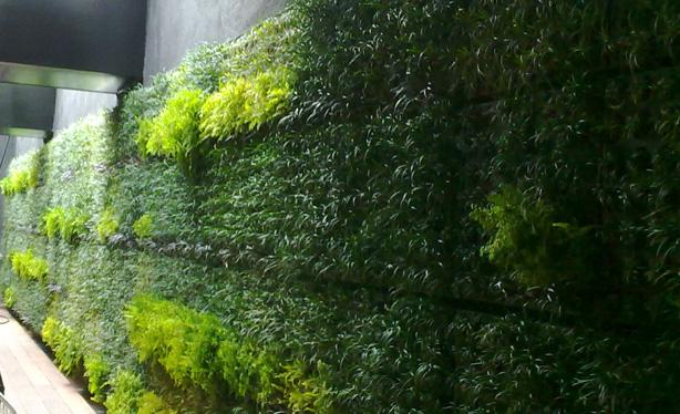 Cobertura verde 03